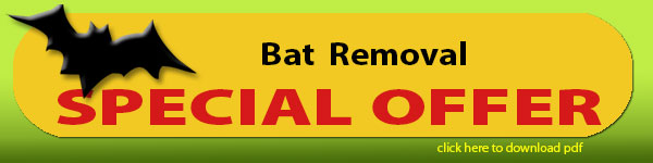 bat removal special
